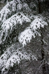 snow_0431