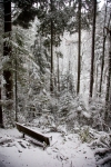 snow_0441
