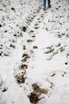 snow_0471