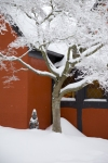snow_0788