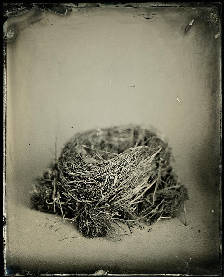 """Nest #1 from the series, """"Nest"""""""