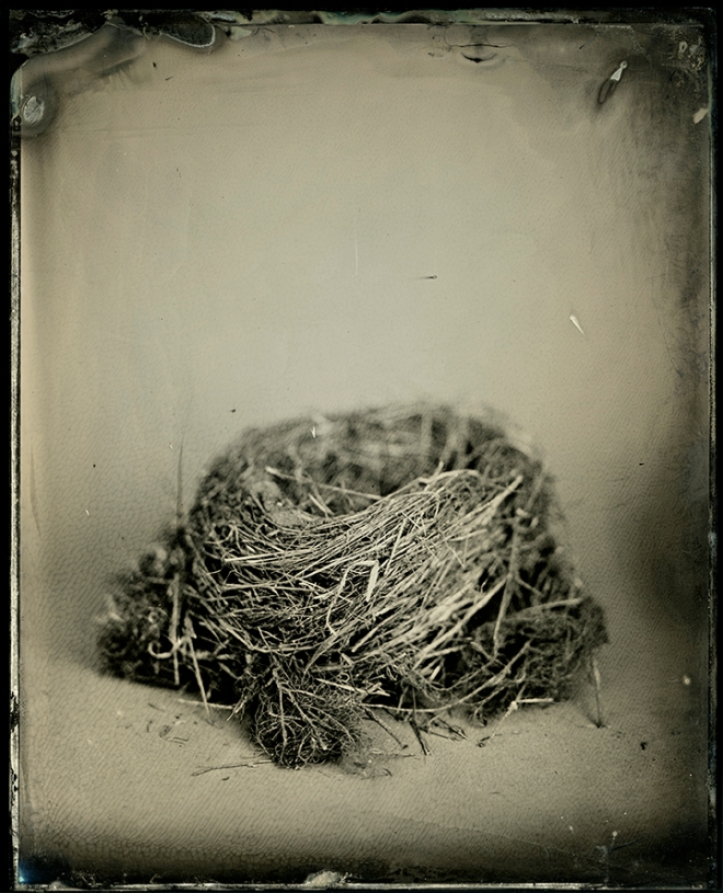 "Nest #1 from the series, ""Nest"""