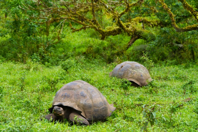 Santa Cruz Island, home to wild giant tortoises and the Charles Darwin Research Center