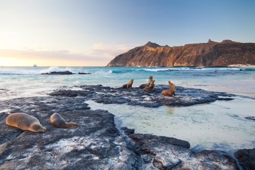 A sandy beach at sunset with galapagos sea lions on the island of San Cristobal
