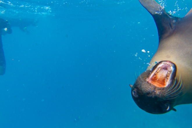 While snorkeling at Champion Islet we encountered some very playful sea lions who had no problem posing for the camera!