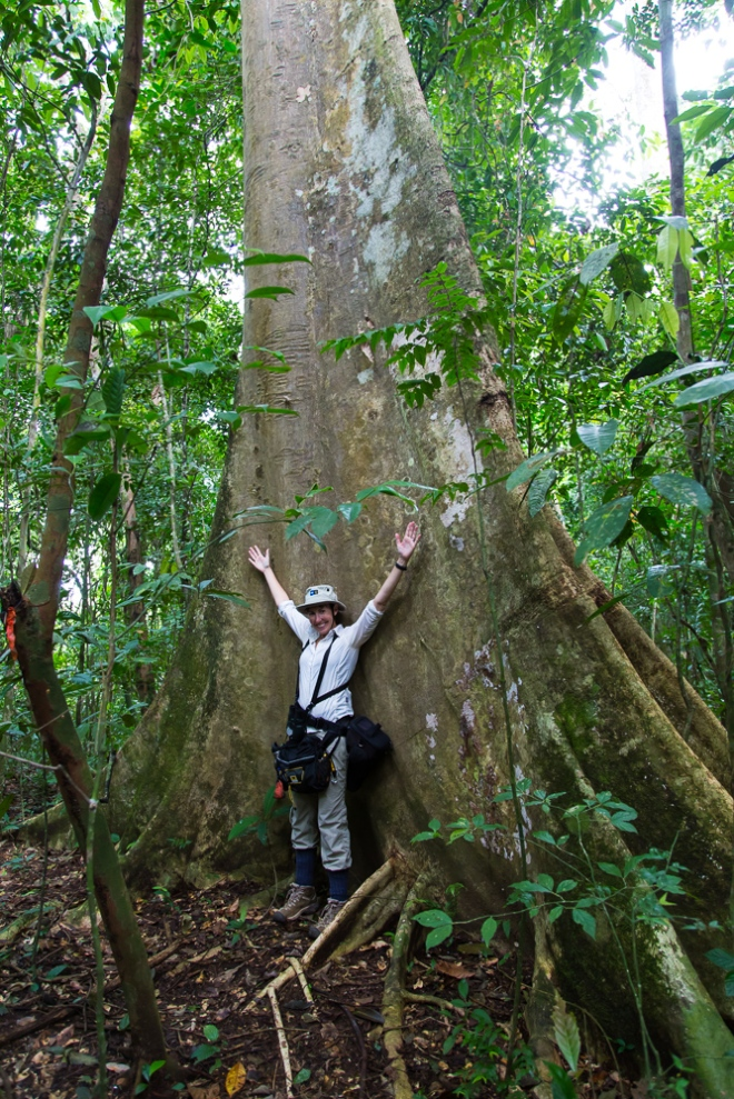 How big are the trees?  Very big. :-)