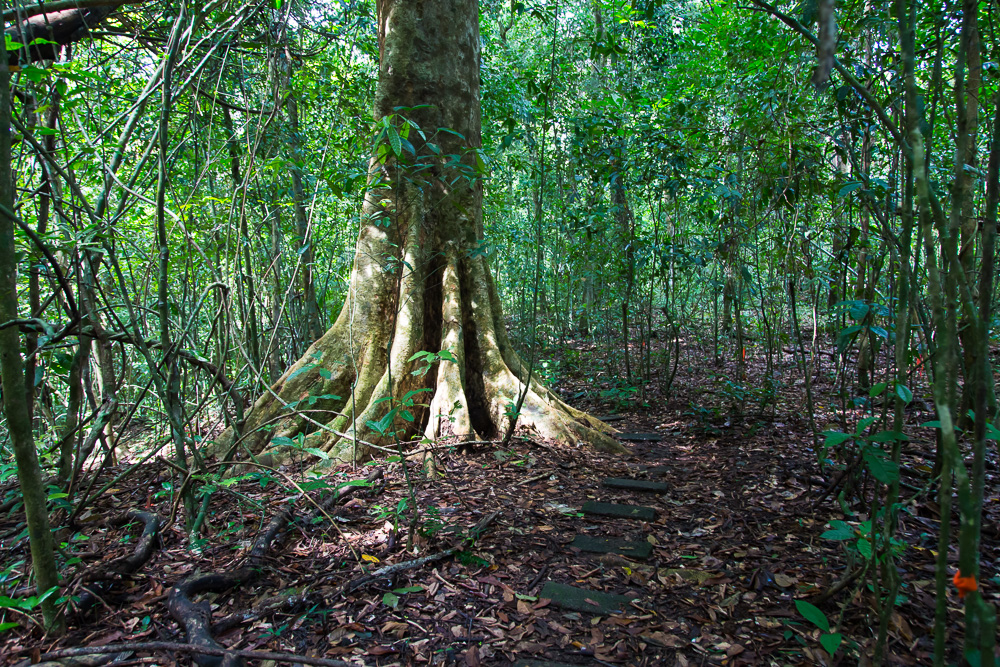 Barro Colorado Island, a site for the study of lowland moist tropical forests owned by the Smithsonian Tropical Research Institute in the Panama Canal and is part of the Barro Colorado Nature Monument.