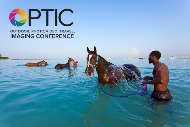Thoroughbred Horses from the Turf Club swimming and bathing in the ocean