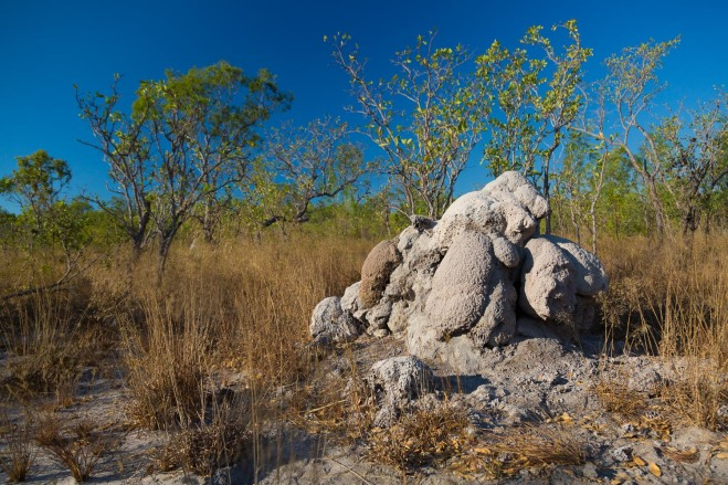 Termite mounds, Vansittart Bay, Kimberley Coast, Australia