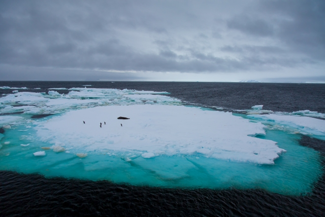 Adelie penguins and a Weddell Seal on an iceberg in the Weddell Sea, Antarctica