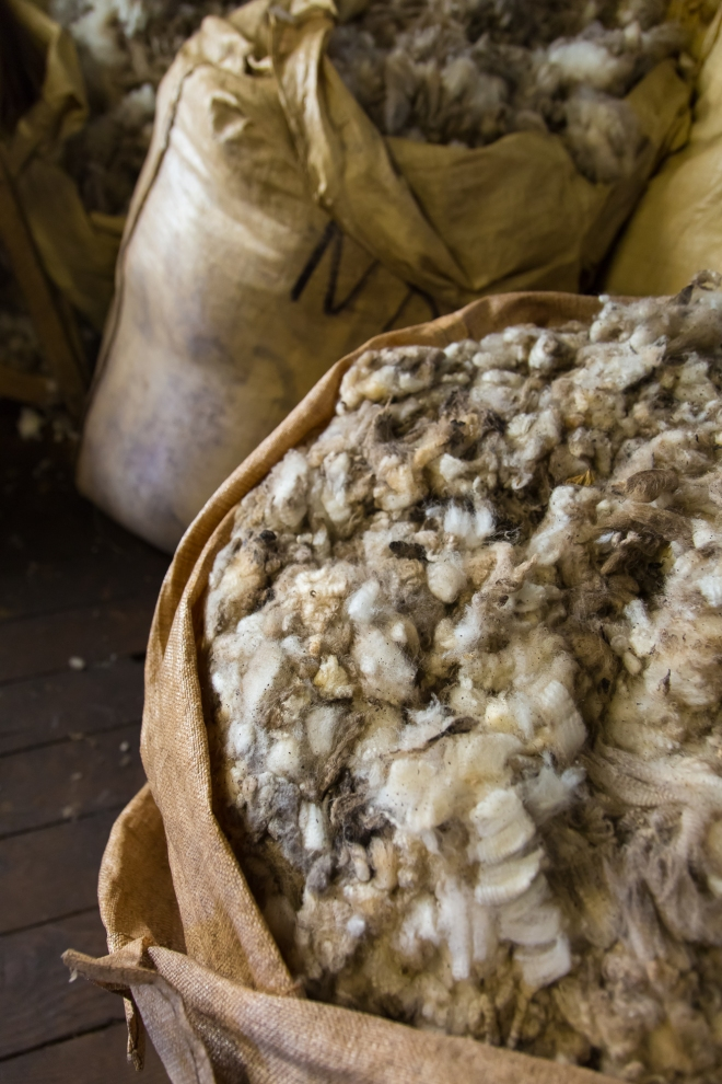 Bags of wool await processing at Long Island Farm, Falkland Islands
