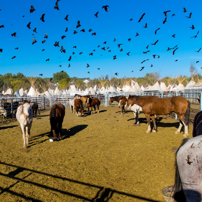 Stock pens at the Pendleton Round Up, Pendleton, Oregon, USA
