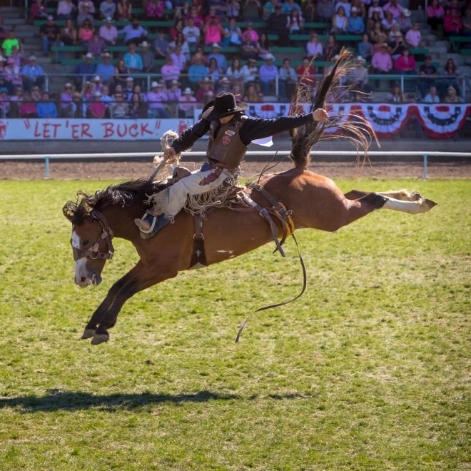 One of the classic rodeo events, the Saddle Bronc competition at the Pendleton Round Up Rodeo, Pendleton OR, USA