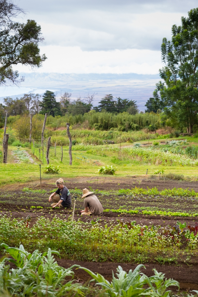 O'o Farm in Kula, Maui, Hawaii, boast gorgeous views from the gardens.